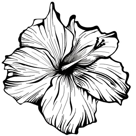 doodle drawings of flowers flower line drawing cliparts co