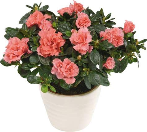 best indoor flower plants the most popular indoor plants of germany fresh design pedia