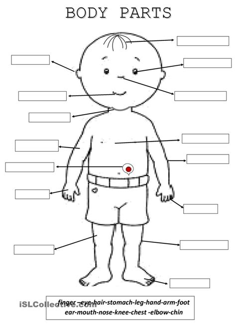 free printable worksheet body parts all about me worksheet free free teacher worksheets