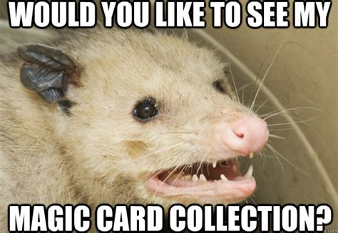 Possum Memes - would you like to see my magic card collection pathetic