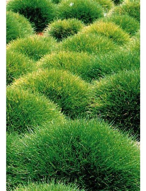 Japanische Pflanzen Winterhart by Japanische Pflanzen Winterhart Siddhimind Info