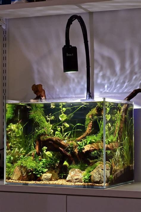 best light for planted tank 424 best fish fish tanks images on pinterest