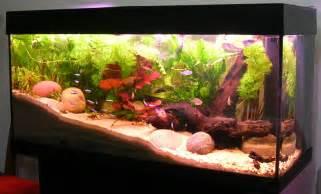 types of aquariums fishkeeping