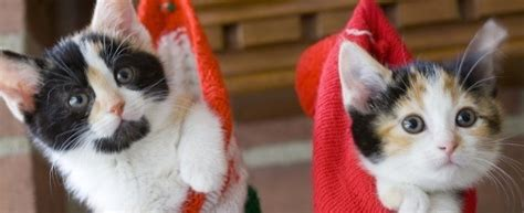 theme names for kittens best christmas themed cat names petplace