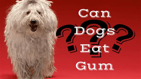 can dogs eat gum smart owners sugar reviews