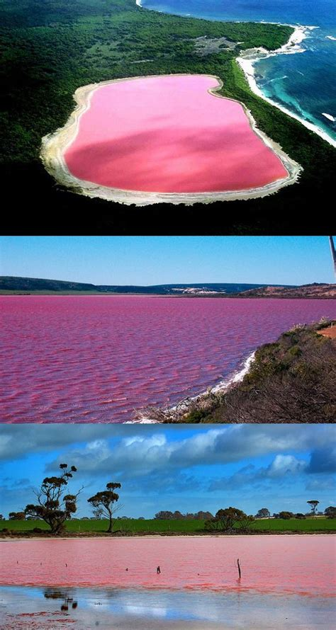pink lake 17 best ideas about pink lake australia on pinterest