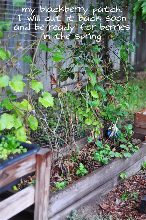 fall and winter gardening fall winter garden planted update with pictures raised