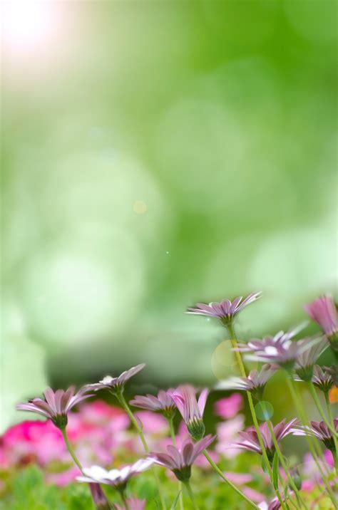 dispensa universitaria sfondo con i fiori 28 images sfondi di fiori colorati