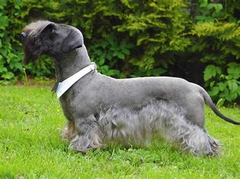 calm puppy breeds calm breeds large breeds picture