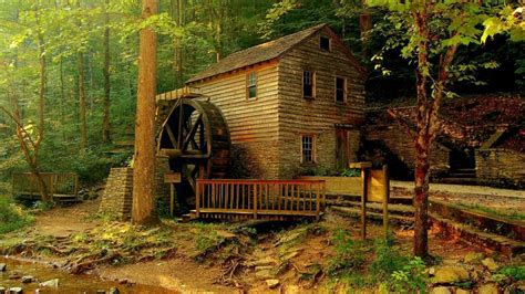 beautiful and amazing forest homes photography things