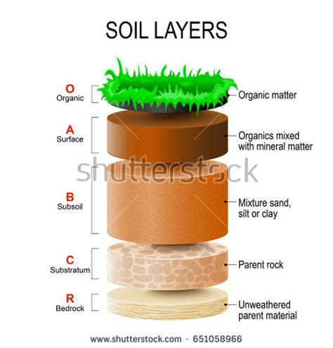 layers of the soil diagram soil layers soil mixture plant residue stock vector