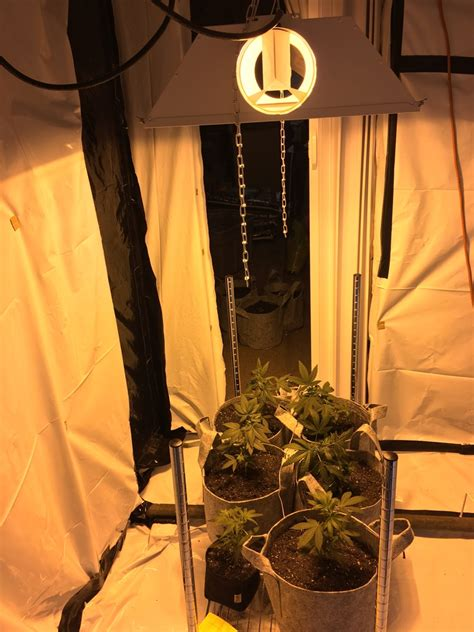 attic grow room new attic grow room setup cks sour seeds soil attic grow room vendermicasa