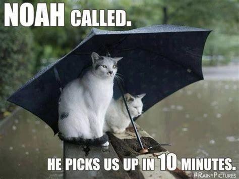 Rain Meme - too much rain sayings and quotes pinterest good