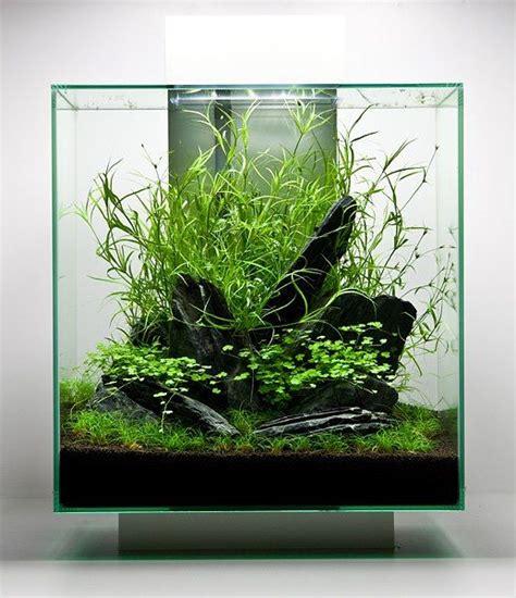 nano aquascapes aquascape project