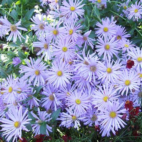 Die Schönsten Blumen 4899 die sch 246 nsten blauen blumen im garten anbauen