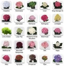 flowers by color best 20 hydrangeas ideas on