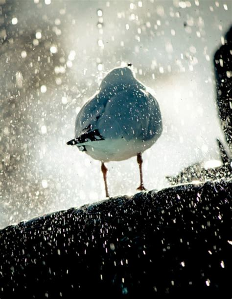 images of love birds in rain 127 best images about trees flowers and birds on