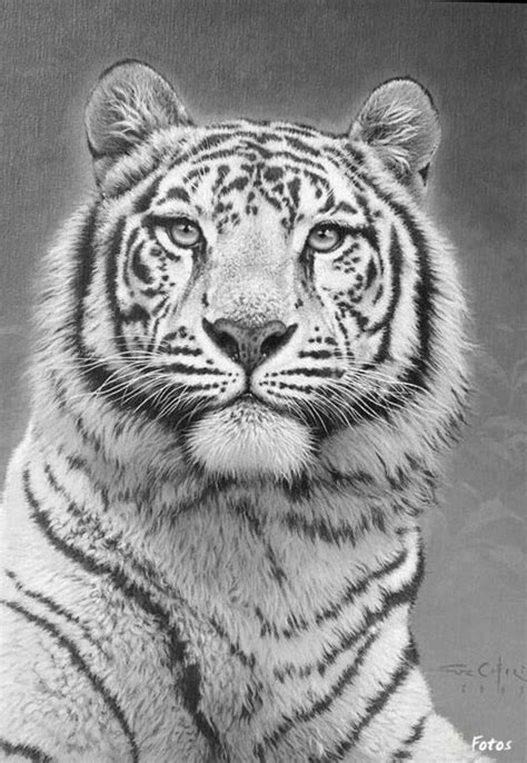 advanced tiger coloring pages tiger cat coloring pages colouring adult detailed advanced