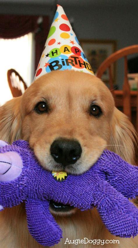 golden retriever birthday ecard best 25 happy birthday puppy ideas on happy birthday image and