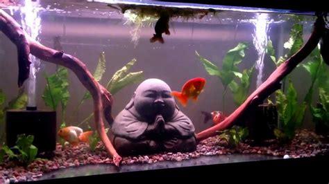 Aquarium For Home Decoration zen buddha ranchu aquarium youtube