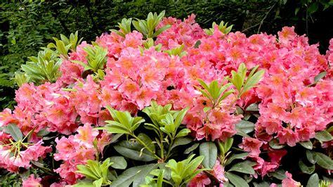 welche blumen blühen den ganzen sommer im garten was bl 252 ht im sommer gartennatur