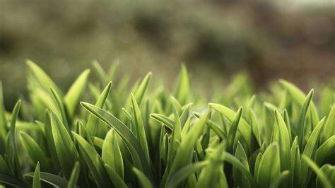 wallpaper abstract grass soft light grass hd wallpaper 187 fullhdwpp full hd