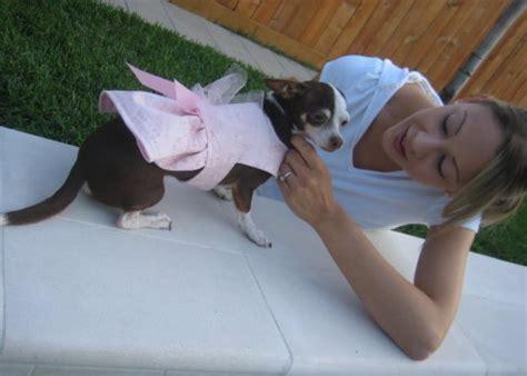free pattern chihuahua clothes how to make custom dog clothing hgtv