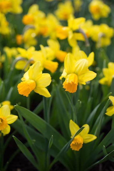 spring bulbs for shady gardens
