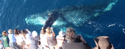 marina del rey boat rentals groupon groupon for whale watching in marina del rey