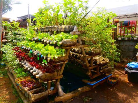 beginners guide  growing  vegetable garden  home