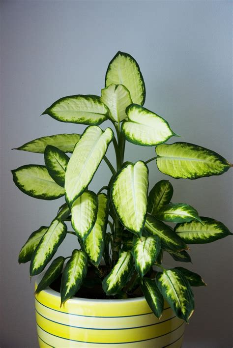 low light plant low light houseplants plants that don t require much light