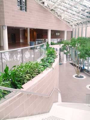 maple interior plantscaping portfolio