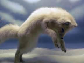 funny fox photos funny animal