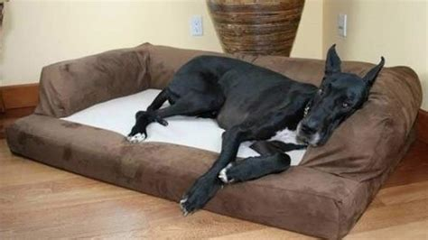 large dog beds for sale top 10 best large dog beds for sale 2018 heavy com