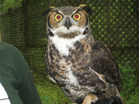 carolina raptor center huntersville