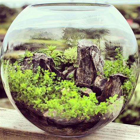 bioattic terrariums are beautiful miniature landscapes a