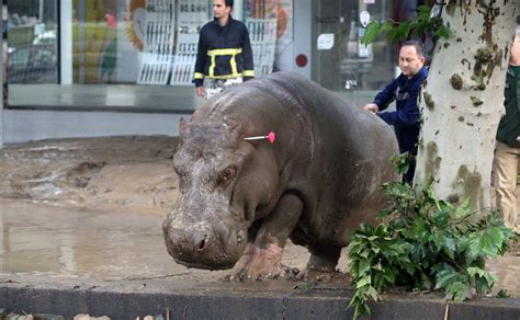 tbilisi search on for people zoo animals missing in georgia flood search is on for people and zoo animals missing in