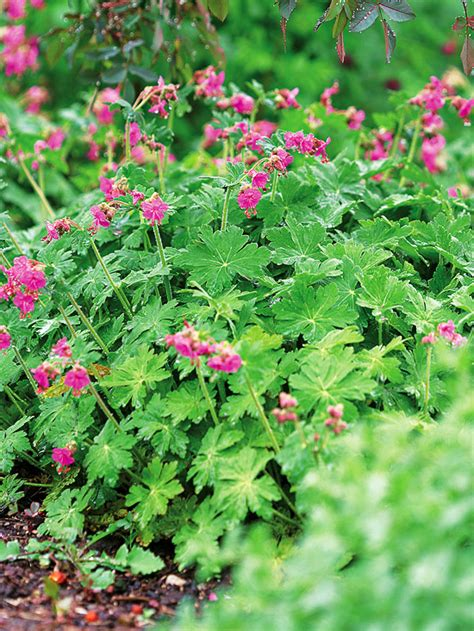 Flowers For Shade Garden The 10 Best Perennials For Shade