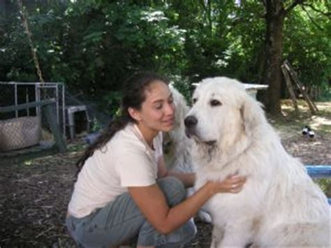 great white pyrenees puppies for sale great pyrenees puppies for sale