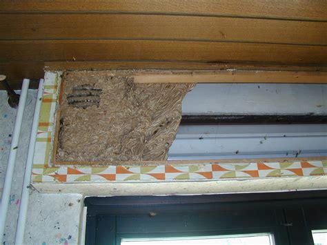 Wespennest Balkon by Beratung Telefon