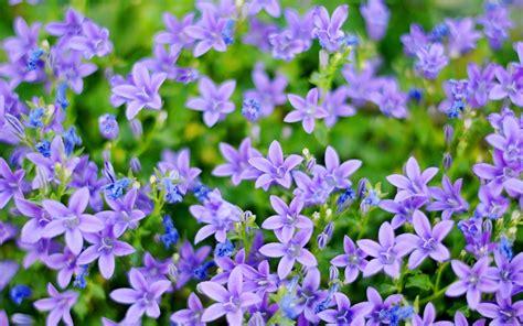 Small Purple by Small Purple Flower Hd Wallpaper 1211976