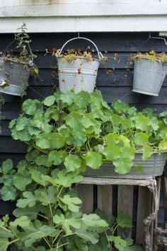 chefs wall garden  growing edible plants easy