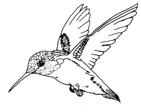 coloring page hummingbird birds ruby throated hummingbird bird coloring page