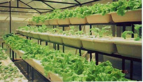 artikel cara membuat alat hidroponik budidaya sayuran organik di polybag bibit online