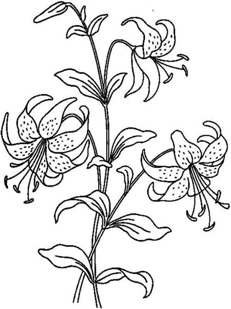 lily flower coloring page lily flower coloring pages download and print lily flower
