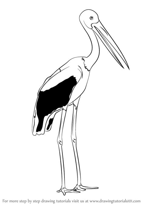 Learn How to Draw a Black-Necked Stork (Birds) Step by