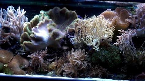 Soft Aquarium 240 soft coral reef aquarium