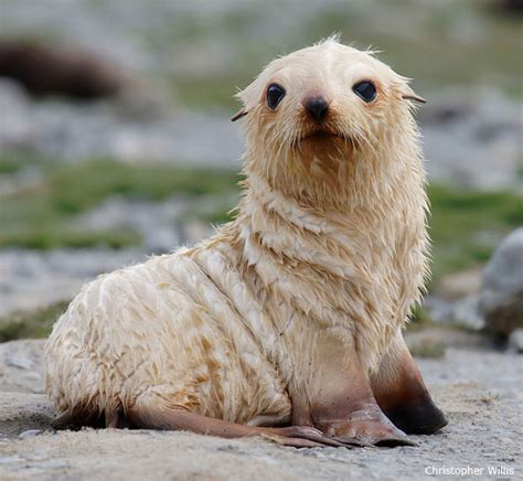 pup seal 15 adorable wildlife puppies for national puppy day the
