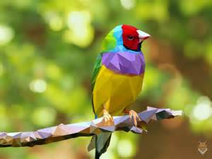 colorful bird pictures the colorful bird vector diego cos by diego1a on