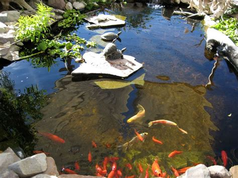 best 14 backyard turtle pond images on outdoors